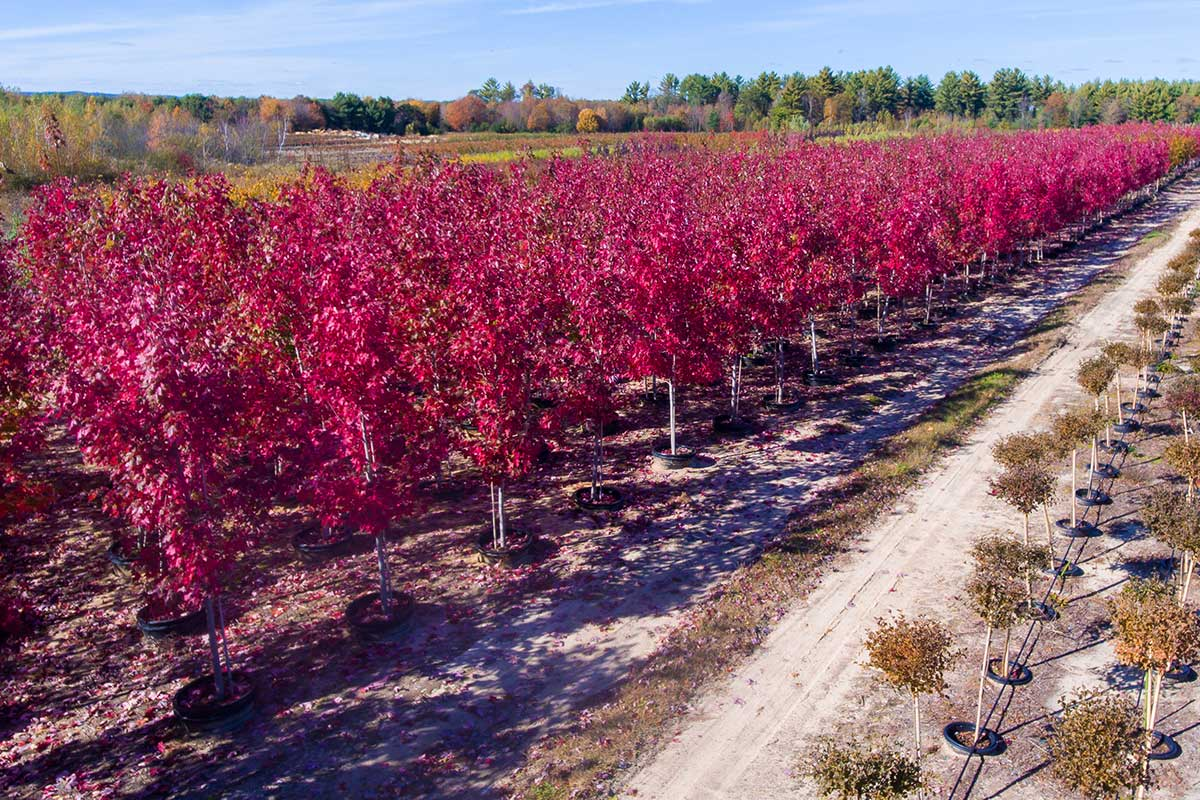 Northern Family Farms Wholesale Trees
