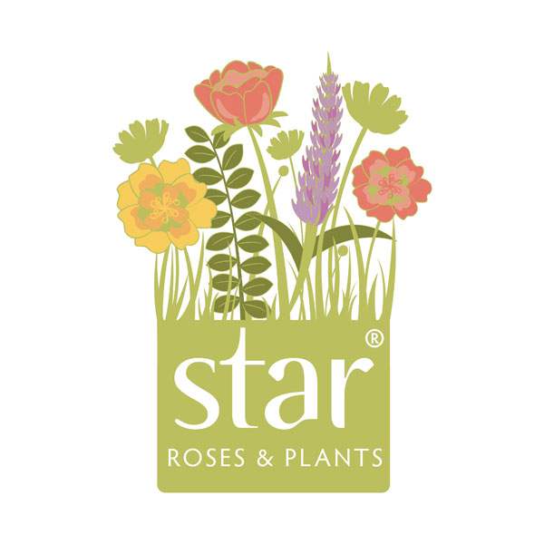 Star Roses & Plants
