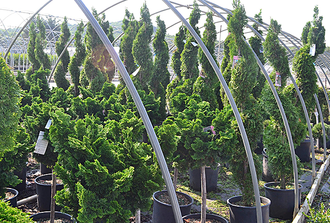 Wholesale Topiary in Wisconsin