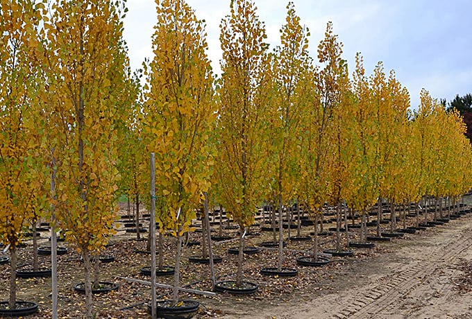 Northern Family Farms Fruit Tree Nursery