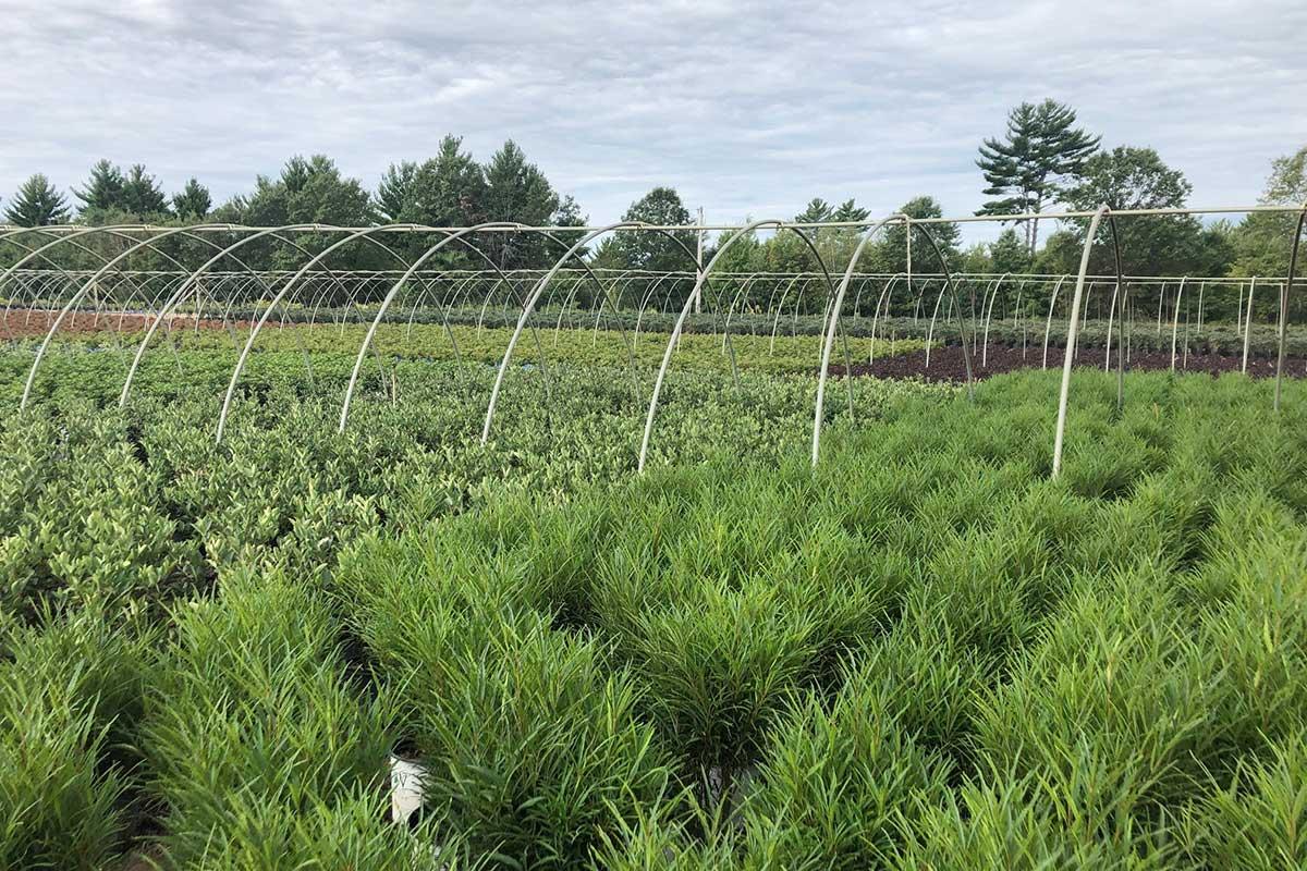 Wholesale Nursery Plants - NFF