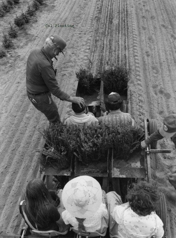 Cal Planting - Northern Family Farms History