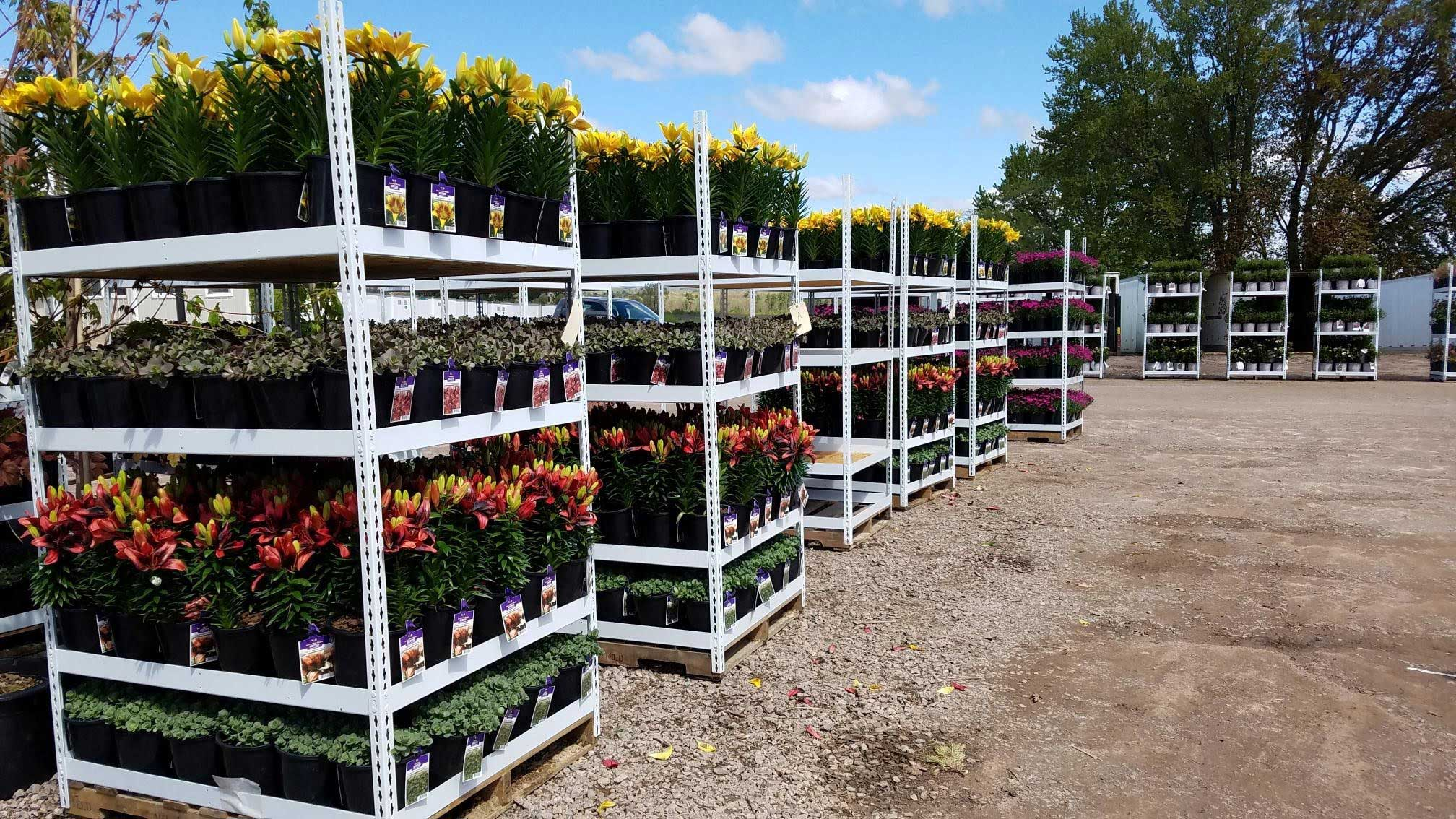 Northern Family Farms Nursery Plants